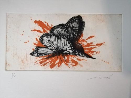 - Mariposa mancha naranja