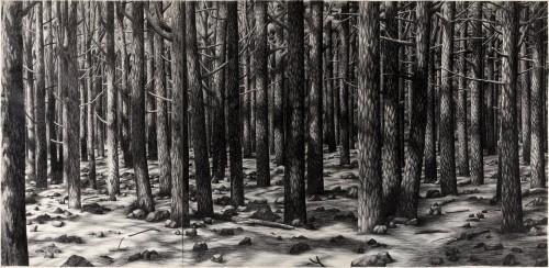 - Gran Bosque