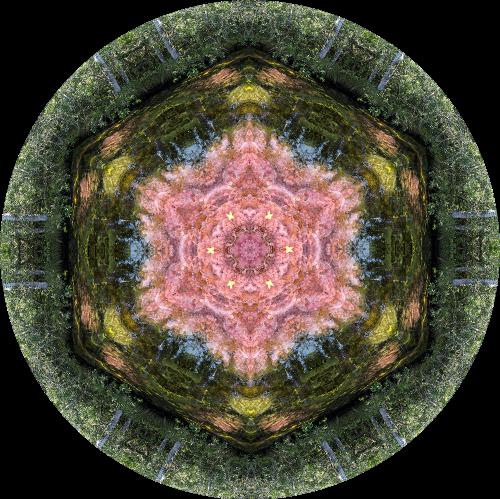 - Macarenia Clavijera Mandala (Caño Cristales)