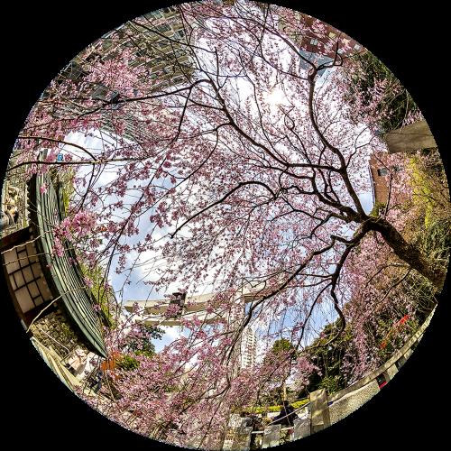 - Templo Florecido (Tokio, Japón)