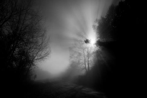 - Niebla